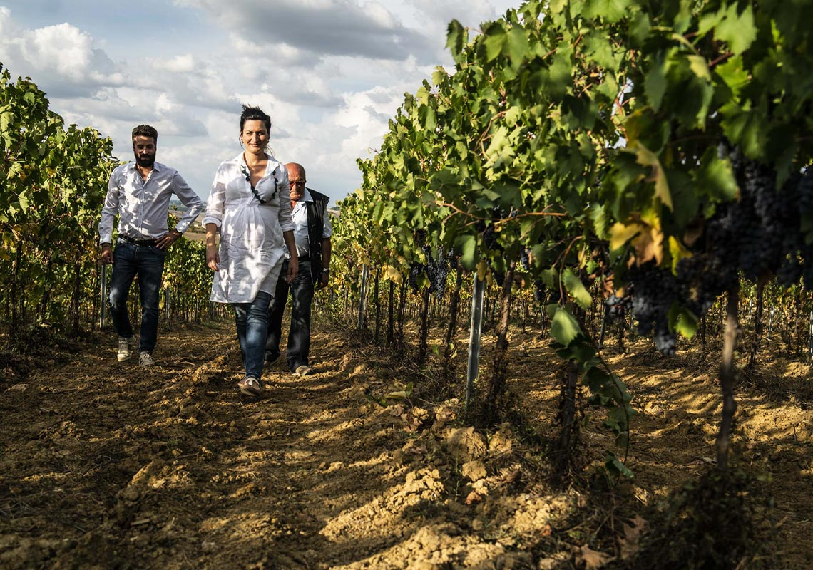 Tamburini Winery - vineyards