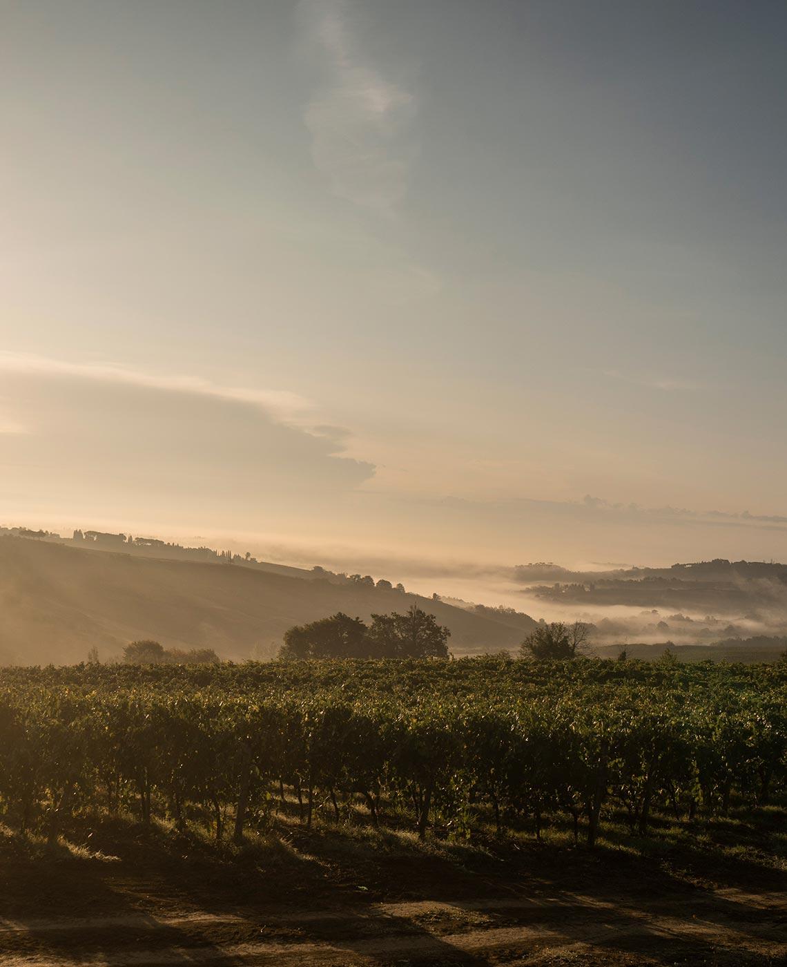 Tamburini Winery - photo