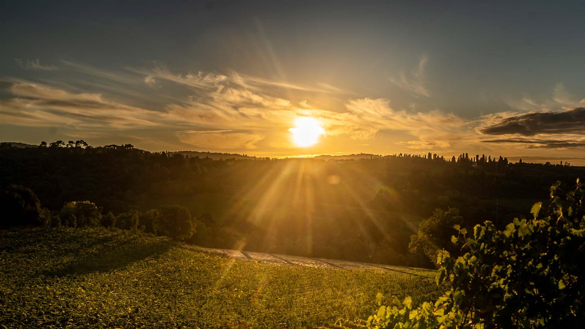 Sunset in Tamburini estate
